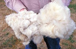 Натуральная овечья шерсть