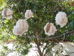 Капок растет на дереве Сейба