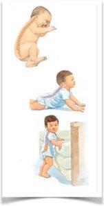 Стадии развития новорожденного