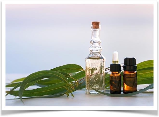 Эфирные масла эвкалипта в пузырьках и листья растения