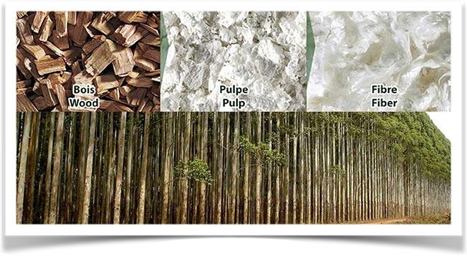 Технология обработки эвкалиптового волокна