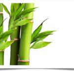 Стебли растения бамбук